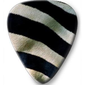 21 zebra